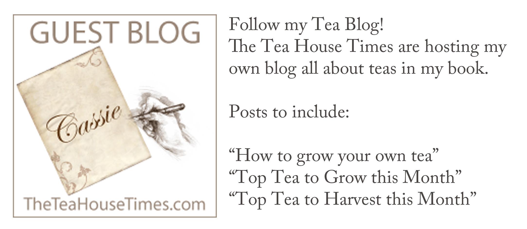 Blog link info