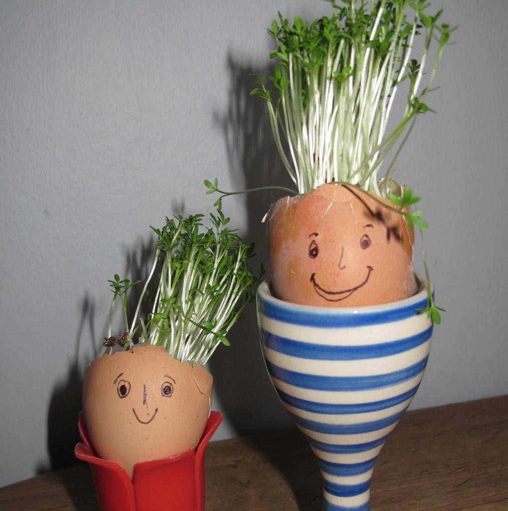 Cress-egg-E